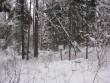 Linnuse õueala, mälestise tähis ja infotahvel. Foto: Ulla Kadakas, 13.12.2012.