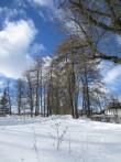 15671 Neeruti mõisa allee, vaade idast, peahoone poolt  pilt: Anne Kaldam, aeg: 07.03.2013