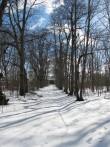 Sikassaare mõisa pargi allee vaatega mõisa peahoone poole. Foto: Mari Loit: 7.03.2013
