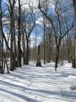 Sikassaare mõisa park.  Vaade pargis olevale mälestussambale. Foto: Mari Loit: 7.03.2013