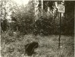 Maa-alune kalmistu. Foto: O. Kõll, 07.09.1979.