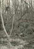 Ohvrikivi - kagust. Foto: O. Multer, 29.04.1981.