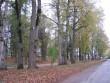 Vinni mõisa park :15998 VAADE KIRDEST .peahoone ees olevale pargiosale-pargi põhjapoolne osa, Vinni -Mõdriku teelt.  Autor ANNE KALDAM  Kuupäev  16.10.2007