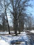 Vana-Antsla mõisa park. Foto Tõnis Taavet, 16.04.2013.