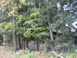 Vaade teeäärsele kiviaiale. Foto: Kalli Pets, 05.10.2007.