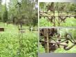 Simuna kalmistu, reg. nr. 5752. Vaateid vanadele hauatähistele. Foto: M.Abel, kp. 30.05.13