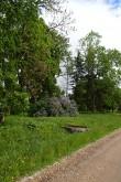 Avanduse mõisa park, reg. nr. 15625. Vaade mõisapargi lõunaosale. Foto: M.Abel, kp. 30.05.13