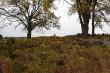 Kivikalme, reg nr 10566. Vaade põhjast. Foto: M. Abel, 04.10.2013.