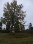 Kivikalme, reg nr 10567. Vaade lõunast. Foto: M. Abel, 04.10.2013.