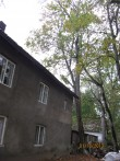 Lustivere mõisa teenijatemaja lõikamist vajavad puud Foto: Sille Raidvere  Kuupäev: 01.10.2013