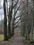 15763 Lasila mõisa park. vaated pargi lõunapoolses osas. foto: Anne Kaldam 05.11.2013