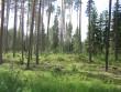 Vaade kääbaskalmistule Tuderna poolselt küljelt. Foto: Viktor Lõhmus, 12.07.2013.