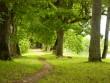 Puurmani mõisa park, vaade jõe-äärsele alleele.  Foto: Sille Raidvere  Kuupäev: 06.08.2008