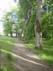 Luua mõisa pargi allee  Foto: Sille Raidvere  Kuupäev: 06.06.2012
