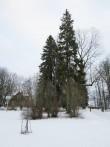15978 Inju mõisa park, vaade, Foto: 06.12.2013 Anne Kaldam
