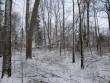 15978 Inju mõisa park, vaade parkmetsale näha surnud mahakukkunud puud, Foto: 06.12.2013 Anne Kaldam