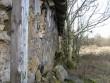 Seina ääres kasvav võsa ja puud  Autor Kalli Pets  Kuupäev  14.02.2008