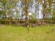 Kivikalme. Foto: Tarvi Sits, 11.06.2004.