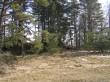 Kalmed pildistatuna Tartu-Võru maanteelt. Foto: Martti Veldi, 11.03.2008.