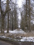 Einmanni mõisa park :  Autor Anne Kaldam  Kuupäev  17.03.2008