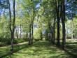 Puuderead näitavad kalmistu algset korrapärast struktuuri. Foto Egle Tamm, 16.05.2014.