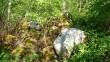 Kivikuhilametsa servas, kus eeldatavasti peaks asuma lohukivi reg nr 10243. Foto: M. Abel, 22.05.2014.