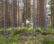 Foto: Tarvi Sits, 01.07.2004.