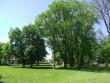 Lehtpuude ridaistutus pargi keskosas. Foto Silja Konsa 22.05.2014.