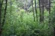 Kalme asukoht metsas, kus on näha lagedamat ala. Foto: A. Rudi, 28.05.2014.