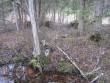 Vaade kirde suunas põllulapi poole. Foto: Kalli Pets, 17.03.2008.