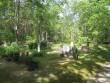 Lümanda kalmistu. Foto: R. Peirumaa. Kuupäev  10.06.2008