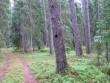 Kääpa tähis asub kääpast läänes, teisel pool metsateed. Foto: Viktor Lõhmus, 12.06.2008.