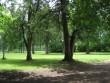 Salla mõisa park 15717, vaade pargi lõunapoolsele osale.  Autor ANNE KALDAM  Kuupäev  16.06.2008