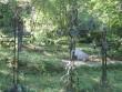 Iide külas olev Torgu kalmistu. Foto: Rita Peirumaa. Kuupäev  22.05.2007