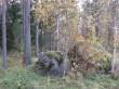 Holvandi kääpad II grupp. Soliidsete raudkivide kõrval metsas algab kääbaste rida. Foto: Viktor Lõhmus, 22.04.2014.