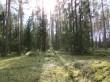 Kääpad põhja suunast Mädajärve kaldal. Viktor Lõhmus 19.03.2015