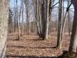 Park  Autor Sille Raidvere  Kuupäev  27.03.2007