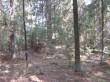 Vaade kääbastiku keskosale. Tihe mets segab nähtavust. 22.04.2015 Viktor Lõhmus