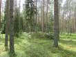 Vaade kääpale põhja-kirdest 20.05.20115 Viktor Lõhmus