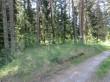 Kalmistu 18433 tähis, vaade kalmistuala keskelt loodest, Hundituru talu sissesõidutee koha pealt. Foto 1.06.2015, Anu Kivirüüt.