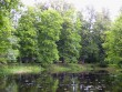 park tiigi vaatega  Autor Sille Raidvere  Kuupäev  06.08.2008
