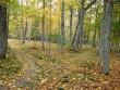 Park  Autor Sille Raidvere  Kuupäev  01.10.2008