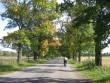 Palmse mõisa alleed 15895:vaade mõisa poole Ilumäe poolt  Autor Anne Kaldam  Kuupäev  24.09.2008