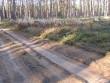 Osa kääpast, metsatee ääres. Foto: Viktor Lõhmus, 21.10.2008.