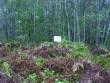 Foto: Tarvi Sits, 22.09.2004.