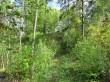 Ohverdamiskoht ''Ugurimägi'' reg-nr 10951. Vaade edelast. Foto 17.05.2016 A.Kivirüüt.