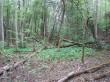 Vaade Miila hiiemäele reg-nr 10373 metsa sees. Foto 17.05.2016, A.Kivirüüt.