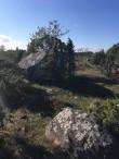 Suuremad kivid kalmeväljal. Foto: Urve Russow 23.09.2016