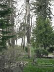 Kuivanud puu idaosas  Autor Kalli Pets  Kuupäev  28.04.2009