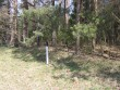 Kääbas tee ääres.  Autor Viktor Lõhmus  Kuupäev  27.04.2009